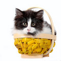 Free Kitten In A Basket Stock Images - 19949504