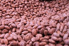 Free Background Of Beans Stock Images - 19943914