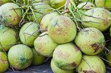 Free Coconuts Stock Images - 19949414