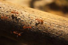 Free Ant Orange Royalty Free Stock Photography - 19949417
