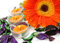 Free Flower And Candles Royalty Free Stock Images - 19950469