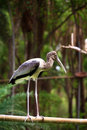 Free Painted Stork Royalty Free Stock Image - 19956986
