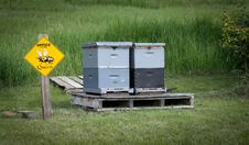 Free Honey Bee Hives Royalty Free Stock Photography - 19952377