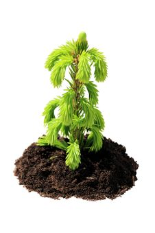 Free Green Seedling Isolated Royalty Free Stock Image - 19952736