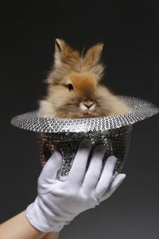 Free Rabbit In The Hat Stock Photos - 19952983