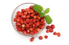 Wild Strawberries Stock Photography