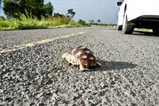 Free Turtle On The Road Stock Photos - 19955653