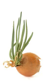 Free Onion Stock Image - 19956581