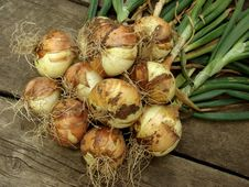 Free Fresh Onion Bulbs Stock Photography - 19957112