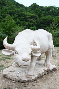 Free White Buffalo Royalty Free Stock Photos - 19957278