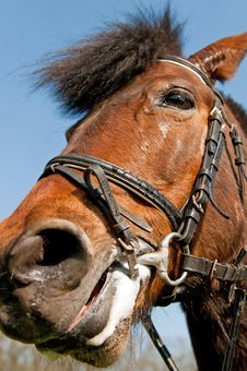 Free Detail Of A Horse Royalty Free Stock Images - 19957279