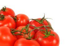 Free Tomato Stock Photo - 19957620
