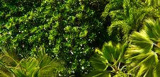 Free Dense Foliage Royalty Free Stock Photography - 19957807