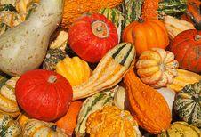 Colorful Pumpkins Stock Photo