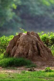 Termite House Stock Image