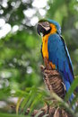 Free Parrot Royalty Free Stock Images - 19962089