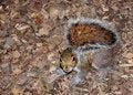 Free Squirrel Stock Photos - 19966293