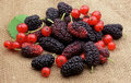 Free Sweet Mulberry And Red Currants Stock Image - 19968861
