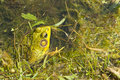 Free Frog In The Pond Royalty Free Stock Image - 19968916