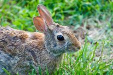 Free Rabbit Royalty Free Stock Photo - 19961385