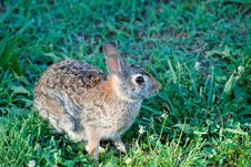 Free Rabbit Stock Photography - 19961462