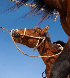 Free Horse Stock Photo - 19962720