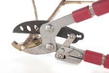 Free The Iron Secateurs Bite A Branch Stock Images - 19963374