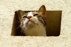 Free Cat In A Wall Stock Photography - 19963412