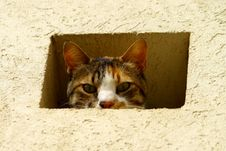 Free Cat In A Wall Royalty Free Stock Images - 19963449