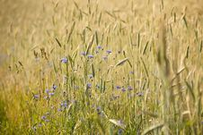 Free Meadow Royalty Free Stock Photography - 19965677