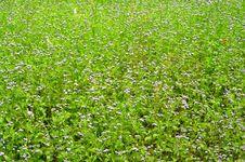 Free Purple Grass Flower Stock Photography - 19965702
