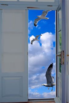 Free Seagulls Flying On Blue Sky Royalty Free Stock Image - 19966686