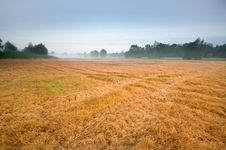 Free Mist On The Field Royalty Free Stock Photography - 19966877