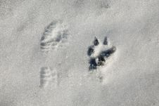 Funny Foot Prints Stock Photo