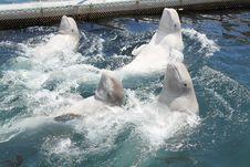 Free Dolphins Stock Photos - 19967223