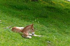 Free Horse In The Grass Stock Photos - 19967443