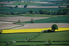 Free Field Of Oilseed Rape Royalty Free Stock Photography - 19968427