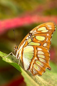 Free Butterfly Stock Photos - 19969593