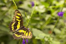 Free Butterfly Stock Image - 19969601