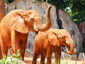 Free African Elephant Stock Photography - 19970852