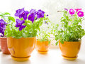Free Flowers Stock Photography - 19974502