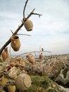 Free Tree With Pots Stock Photo - 19976430