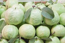 Free Fresh Guavas With Green Leaf Stock Photo - 19970420