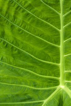 Free Leaf Of A Plant Close Up Royalty Free Stock Image - 19970886