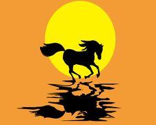 Free Running Horse Stock Image - 19971551