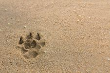 Free Dogs Footprints Royalty Free Stock Photos - 19971708