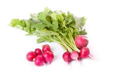 Free Fresh Radish Across White Stock Photography - 19972382
