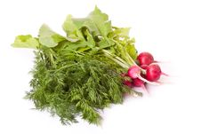 Free Radish And Dill Across White Royalty Free Stock Photos - 19972408