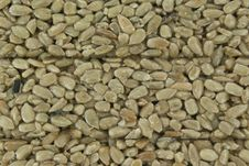 Free Sunflower Seeds As A Background Stock Image - 19972981