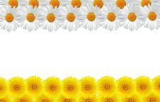 Free Flowers Frame Royalty Free Stock Photos - 19973028